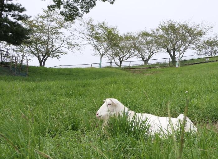 敷地内は北海道のような光景が広がる