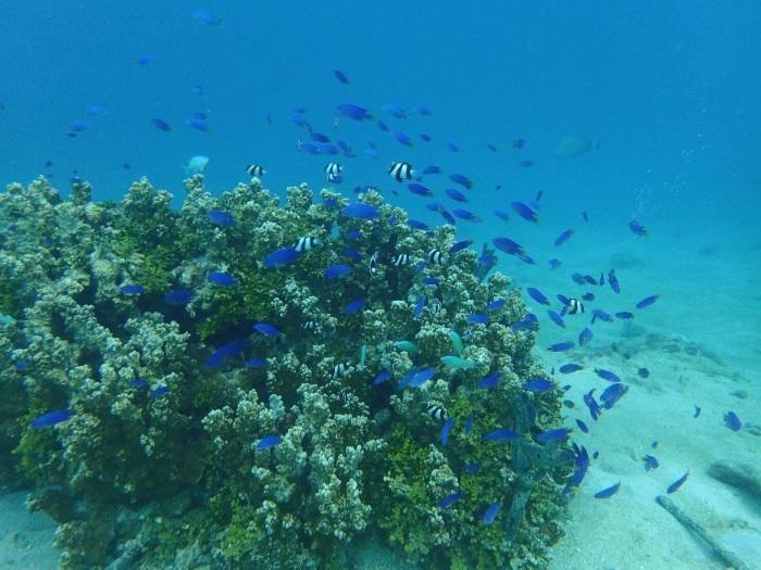 色鮮やかな魚が自由自在に泳ぐ