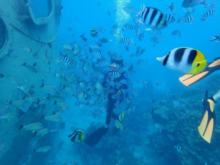餌付け用のソーセージにたくさんの魚が群がる